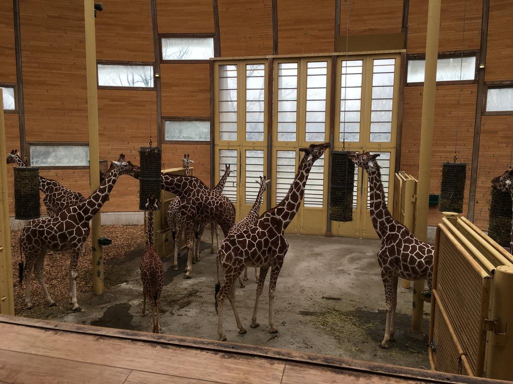 dierentuin2